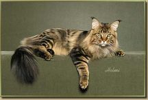 MAINE COON CATS / by Judy Bicknell