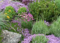 Garden / Tips, tricks and ideas