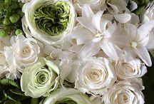 Preserved flower White & Green
