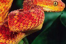 snek/lizard