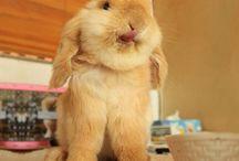 sweet cute and pretty