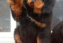 Animales preciosos