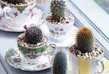 Cactus / Cactus is my favorite