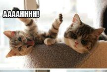 gatos / gatos, los dueños de internet