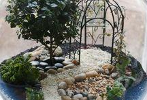 Flowers/succulents/terrarium
