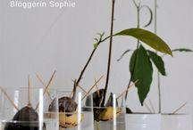 Grüner Daumen für Pflanzen