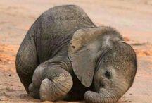 Babyelefanter