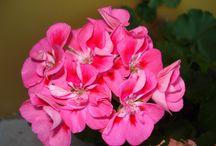 Meu jardim / Onde passo uma boa parte do meu tempo, regando, plantando, cuidando e admirando.