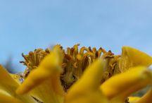 Fleur horizon