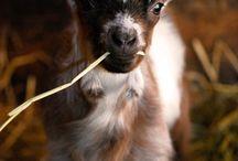 Animals- too cute