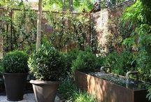 Our Dream Garden