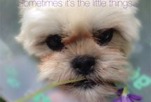 Furballs - Doggie Stuff / Everything pets.