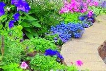 New garden ideas / Gardening