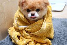 #cute #boo