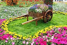 Garden ideias