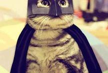 Batman kot