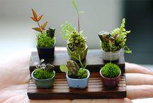 Gardening Small