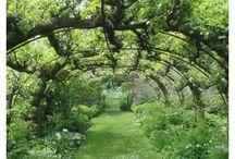 Schaduw in de tuin