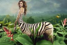 Zebraur ● Female