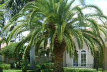 my favorite palms