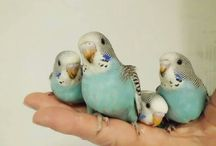 Budgie Love / by Emily