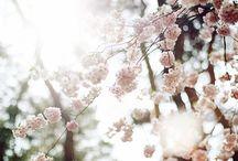 •blooming•