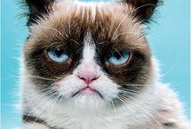Grumpy Cat / his Greatest Hits
