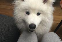 Alaska / My beautiful dog!