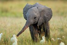 I Love Elephants / Peaceful but powerful.