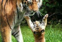 Animal Moms and Kids
