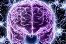 Information about the brain
