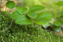 Beautiful Designer Heals / Medicinal plants and alternative medicine.