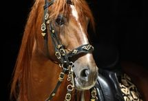Bridles and other equipment