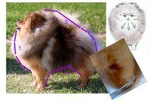 hond trim