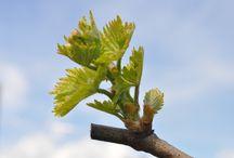 Dans les vignes / Des photos prises dans les vignes, au fil des saisons !