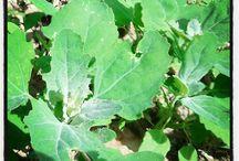 Herbs, weeds, wild plants