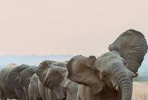 Love for Elephants.