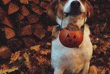 Halloween Fun / Fun with your pets at Halloween.