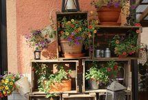 Fruit box garden ideas