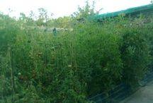 My Garden - Viata la curte privita #dinmansarda