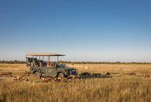 Chitabe+safari+okavango / Best safari lodge in the Okavango delta of Botswana