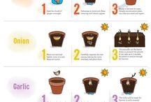 Grow Food - Cool Info, Tips, Tricks