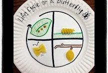 Kinder Cabbage Butterfly Project