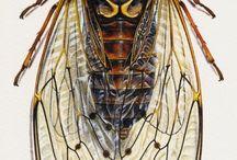 Искусство из насекомых