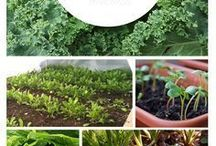 helpful veggie shade ideas