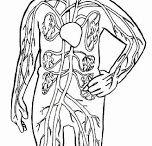 děti - lidské tělo