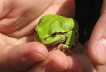 Backyard Frogs Contest - Frogs Are Green