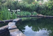 Natural swimming pool / Natural Swimming Pools backyard pond design landscaping gardening