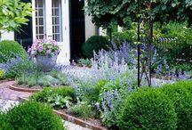 buxus hedge gardens