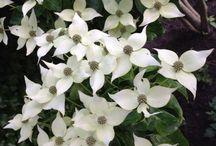 Plant witte bloemen